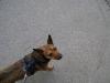Hundebetreuung Wien - Freundschaftliche Hundeführung