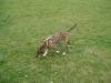 Hundebetreuung Wien - Freundschaftliche Hundebetreuung