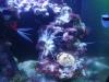 Tierbilder Galerie Stieglecker - Meerwasser Garnele - Je nach Art und Lebensraum ernähren sich Garnelen von Kleintieren, Algen und Partikeln, die auf den Meeresboden sinken.