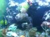 Tierbilder Galerie Stieglecker - Korallen - Die Welt der Korallen ist eines der faszinierendsten Naturwunder der Erde.