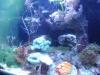 Tierbilder Galerie Stieglecker - Korallen - Korallen leben ausschließlich im Meer.