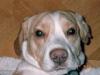 Hundebetreuung Wien - Junge Hunde / Hundekenner wissen, den Hundertprozent verlässlichen Hund gibt es nicht.