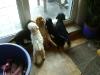 Welpenbetreuung in Wien - Vorort Hundewelpen Betreuung - Indoor Hundebetreuung Wien