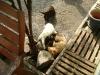 Betreute Welpen - Hundewelpen Vor Ort Betreuung