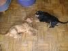 Welpenbetreuung Wien - Dogsitting in Wien
