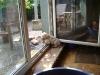 Lagotto Romagnolo Hundewelpe - Der Lagotto Romagnolo war ursprünglich eine Wasserapportierrasse.