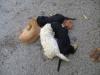 Welpensitting Wien - Hunde betreut in Wien