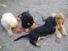 Dogsitting in Wien - Outdoor Hundebetreuung Wien