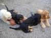 Hunde betreut in Wien - betreute Hundewelpen