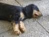 Vor Ort Betreuung Wien - Hunde betreut in Wien