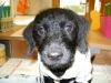 Hundebetreuung Wien - Junge Hunde / Es ist empfehlenswert, Ihren Welpen so früh wie möglich an den Umgang mit Wasser, Bürsten und ähnlichen Pflegeprodukten zu gewöhnen, da das Tier so diese Abläufe von Anfang kennenlernt und sie schnell akzeptiert.