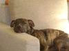 Hundebetreuung Wien - Junge Hunde / Wer annimmt, dass man bei einem Welpen nicht gleich mit der Erziehung anfangen, sondern dem Hundebaby erst mal eine