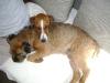 Hundebetreuung Wien - Welpen / Genau das Gegenteil ist der Fall: am leichtesten lernt ein Junghund bis zu seiner 20. Lebenswoche, das ist die so genannte Prägephase.