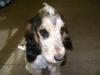 Hundebetreuung Wien - Welpen / Grundvoraussetzung für eine erfolgreiche Erziehung ist, dass Sie Geduld zeigen und Ruhe bewahren, wenn es nicht auf Anhieb klappt.