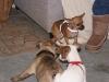 Hundebetreuung Wien - Welpen / Der wichtigste Zeitraum bei der Erziehung eines Hundes ist das erste Lebensjahr.