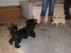 Hundebetreuung Wien - Welpen / Er sollte daher von Anfang an im engen Kontakt zum Menschen heranwachsen.