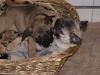 Hundebetreuung Wien - Welpen / Dabei ist auch wichtig, dass alle Kontaktpersonen in einer Familie am gleichen Strang ziehen. Was der eine erlaubt, darf der andere nicht verbieten.