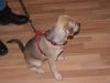 Hundebetreuung Wien -  Hundewelpen / Ein Wurf kann fünf bis vierzehn Welpen umfassen; im Durchschnitt sind es sechs.