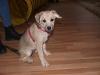 Hundebetreuung Wien -  Hundewelpen / Etwa 9- 12 Tage nach der Geburt öffnen sie die Augen und beginnen zu laufen.