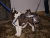 Hundebetreuung Wien -  Hundewelpen /  In den ersten Wochen ihres Lebens können die Welpen ihre Körpertemperatur noch nicht selber regeln und müssen von der Mutter gewärmt werden.
