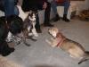 Hundebetreuung Wien -  Hundewelpen /  Später werden die Verhaltensweisen des Beutefangs, die in der Grundstruktur angeboren sind, im Umgang mit kleinen, von Altwölfin zugetragenen Beutetieren trainiert.