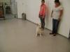 Hundebetreuung Wien - Welpenbetreuung