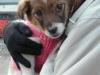 Welpen - In der Praxis werden die meisten Hundewelpen jedoch bis zu einem Alter von zehn Wochen bei der Hündin belassen.
