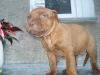 Welpen - Da Hundewelpen sehr schnell wachsen, brauchen Sie auch entsprechend viel Nahrung.