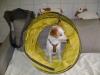 Welpentraining Fotos - Hundebetreuung Stieglecker - Training für Hundewelpen
