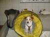 Welpentraining Fotos - Hundebetreuung Stieglecker - Hundewelpen Training