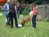 Welpentraining Fotos - Hundebetreuung Stieglecker - Outdoor Hundetraining
