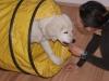 Welpentraining Fotos - Hundebetreuung Stieglecker - Indoor Hundeerziehung