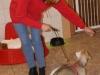 Welpentraining Fotos - Hundebetreuung Stieglecker - Welpen Indoortraining