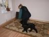 Welpentraining Fotos - Hundebetreuung Stieglecker - Indoor Welpentraining