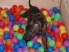 Welpentraining Fotos - Hundebetreuung Stieglecker - Indoor Welpen Einzeltraining
