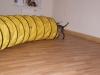 Welpentraining Fotos - Hundebetreuung Stieglecker - Indoor Welpenschule