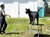 Welpentraining Fotos - Hundebetreuung Stieglecker - Outdoor Einzeltraining